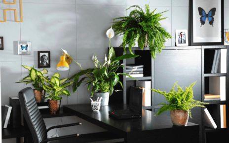 rośliny a powietrze